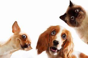 Hund kaufen - Projektmanagement